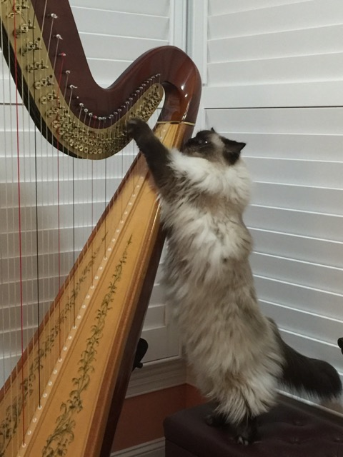 harp2-cat